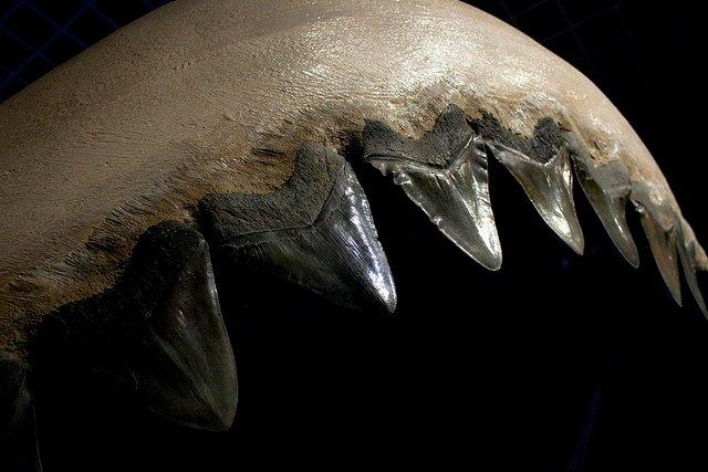 Megalodon il predatore perfetto – Da recensionelibri.org – 2012