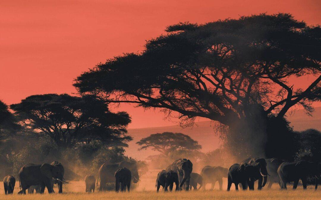 Africa avvelenata