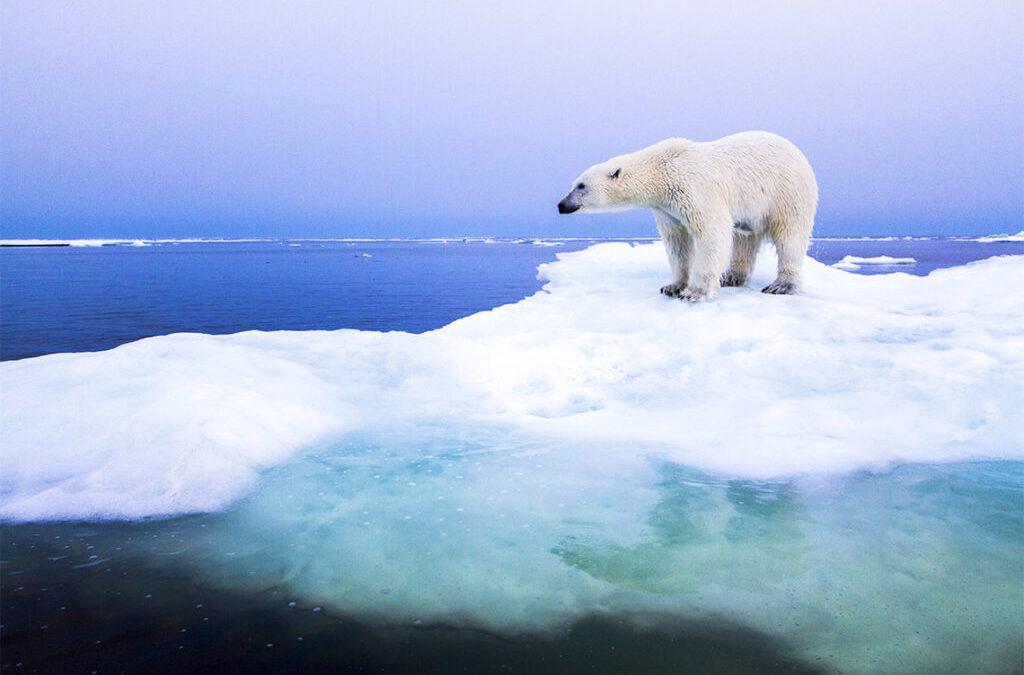 Artide 2040: la fine dei ghiacci