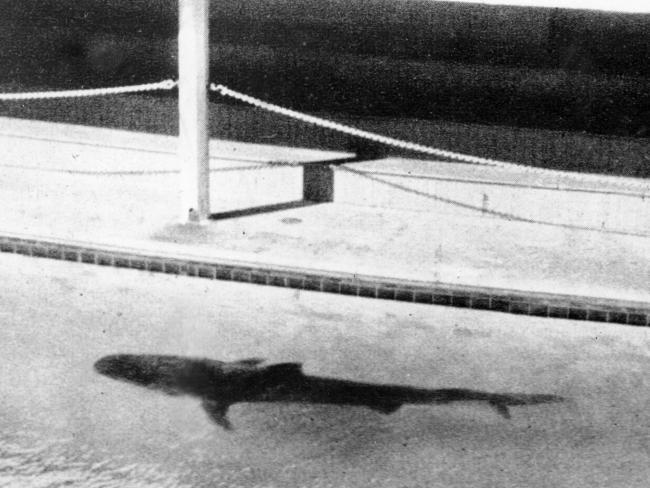 Il caso dell'omicidio, del braccio e dello squalo