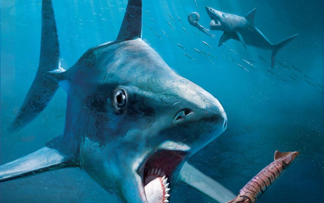 Helicoprion, lo squalo enigmatico